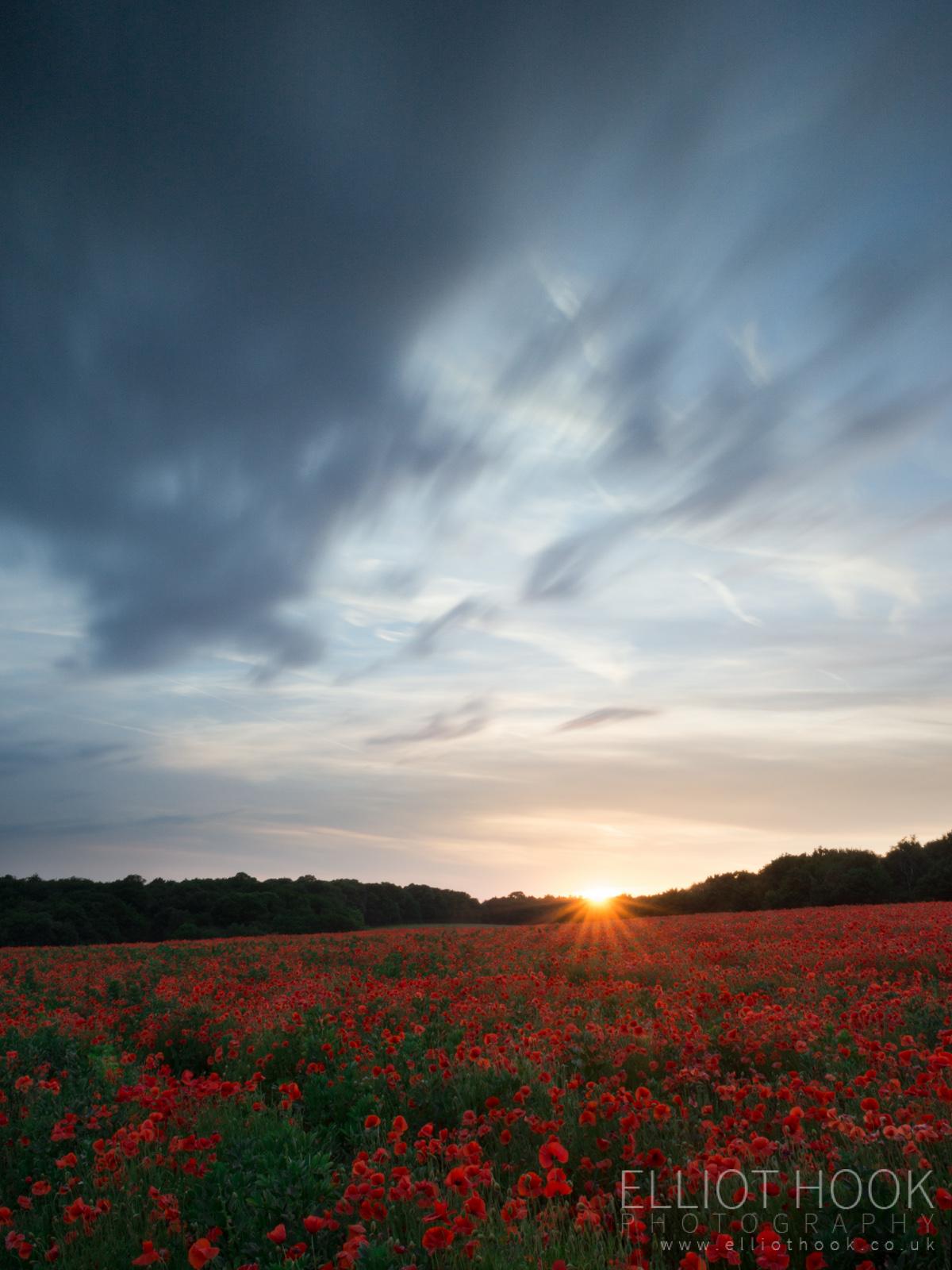 Sunset Poppies II
