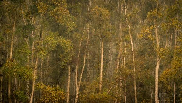 Landscapes telephoto lens