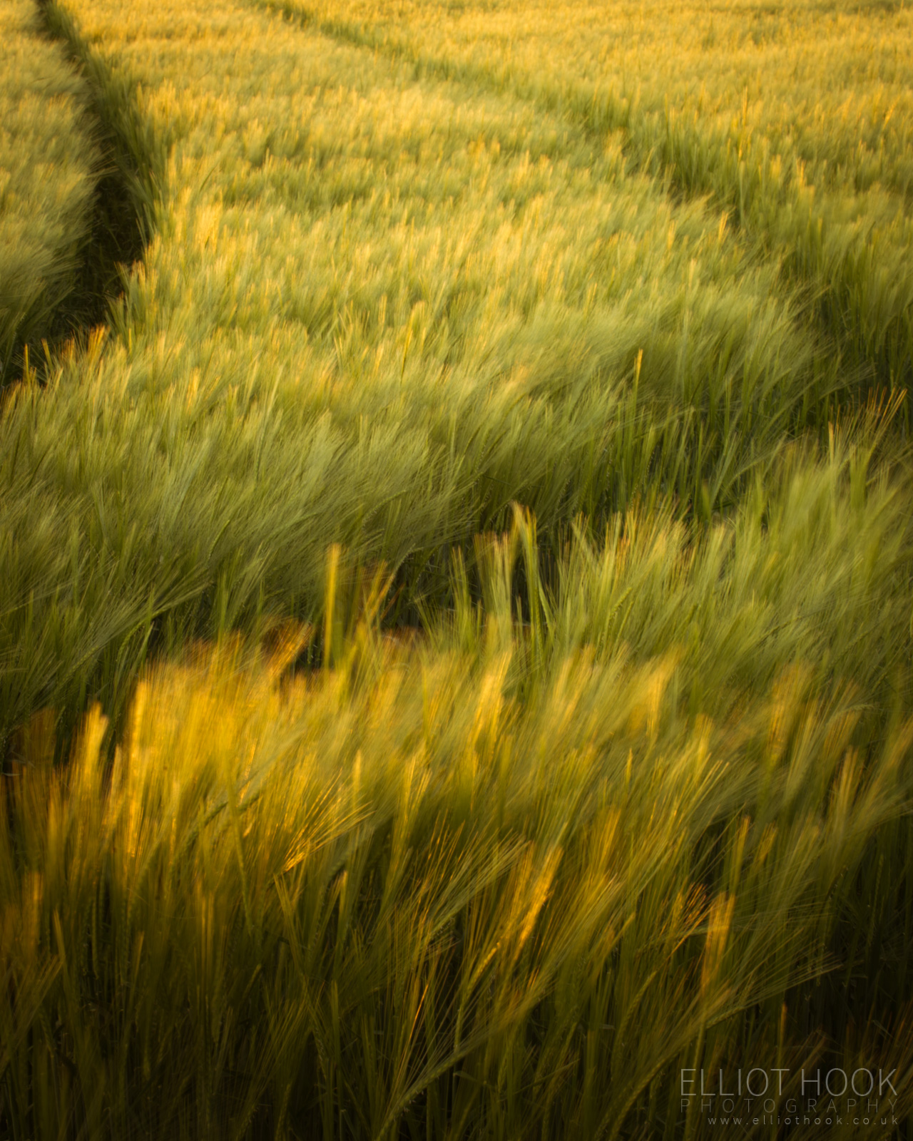 Barley Tracks