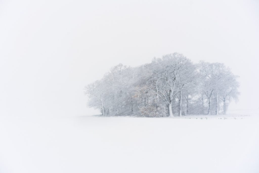 snowy copse of trees
