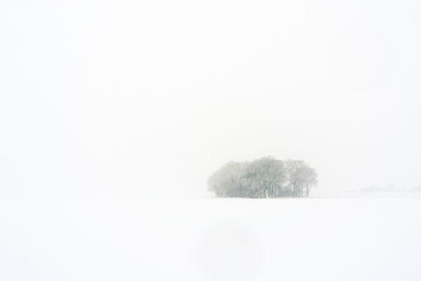 Snowy Copse (Wide)