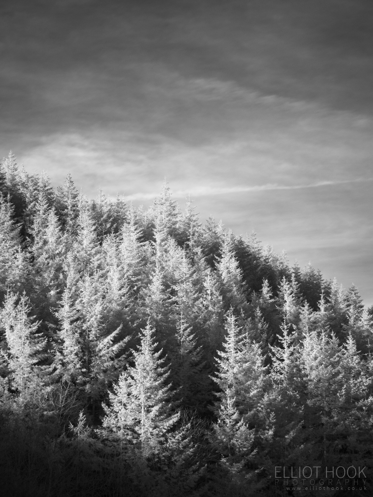 Treetops in infrared