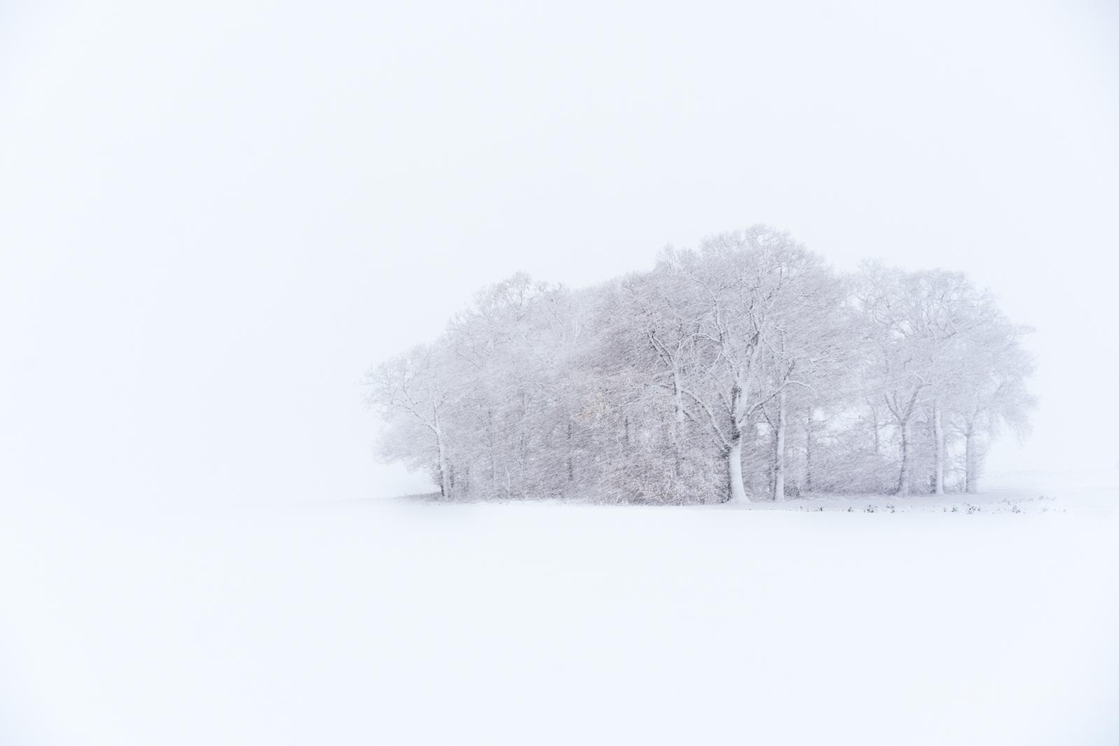 Snowy Copse of trees