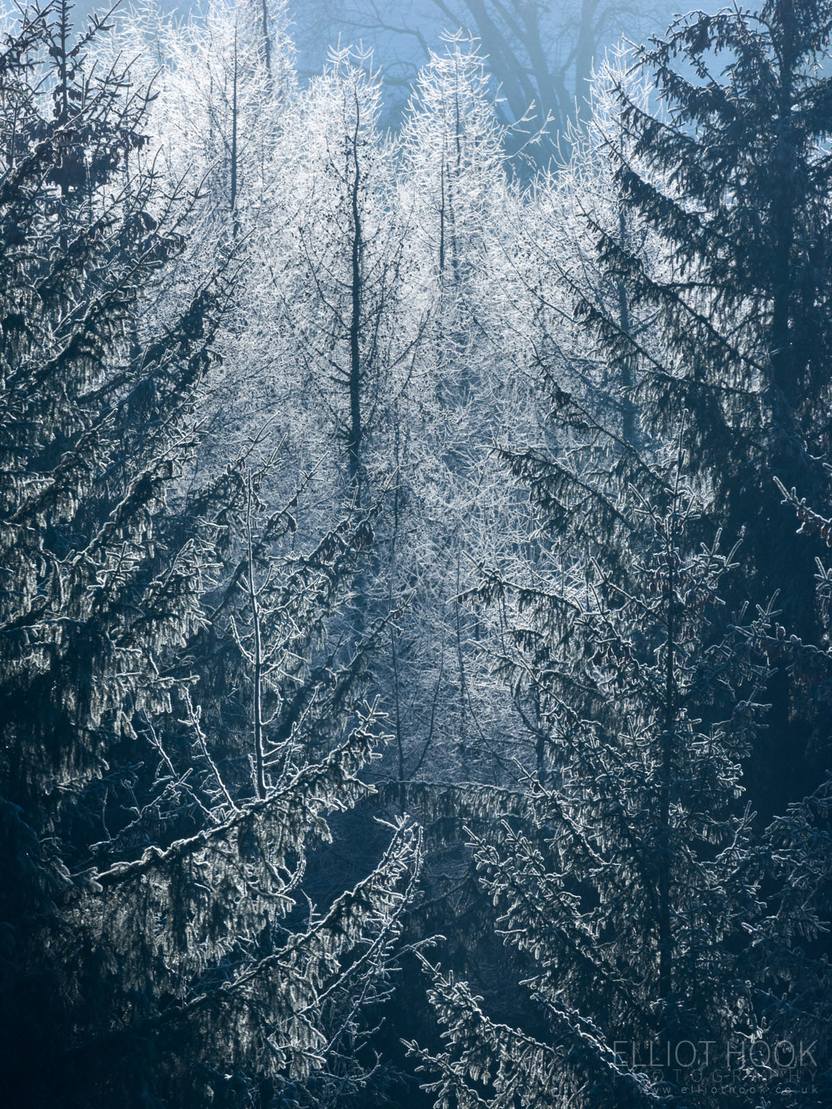 Heavy frost clings to trees backlit by the sun