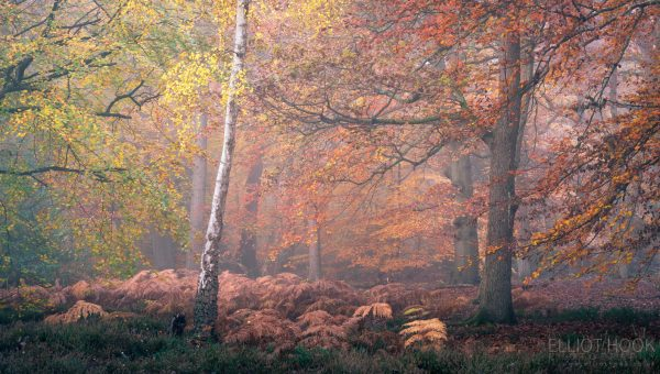 Autumn woodland photography