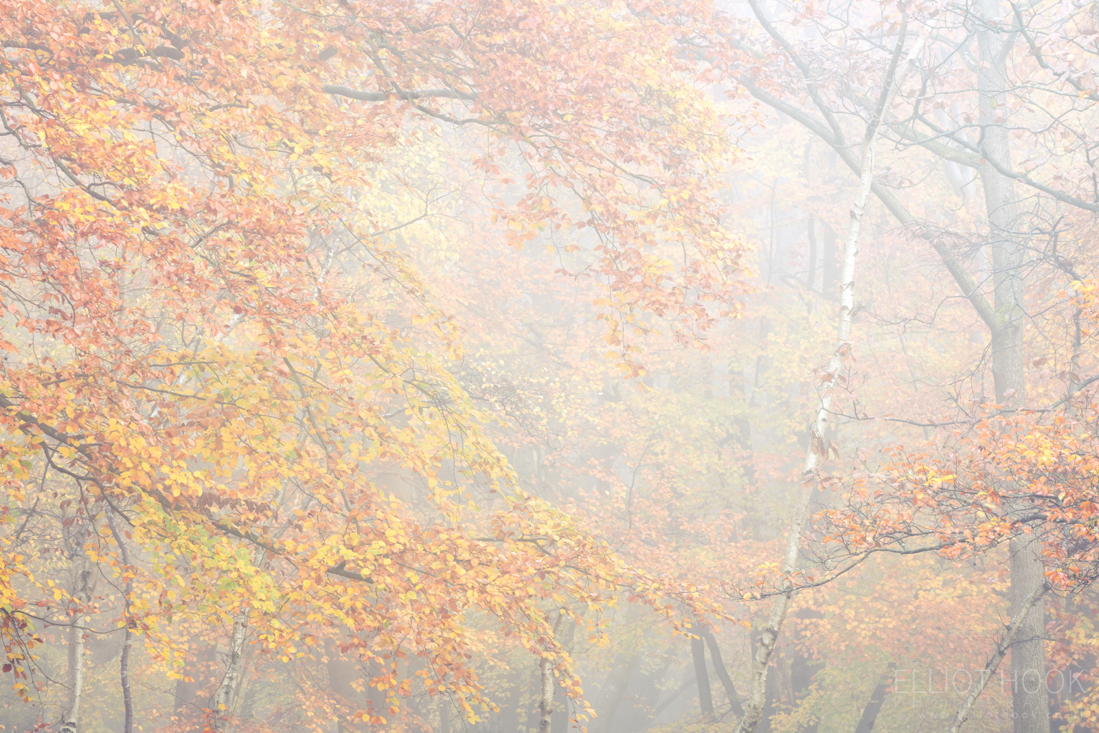 Photograph giving a closer crop of tree canopy showing the pastel colours of autumn in the leaves