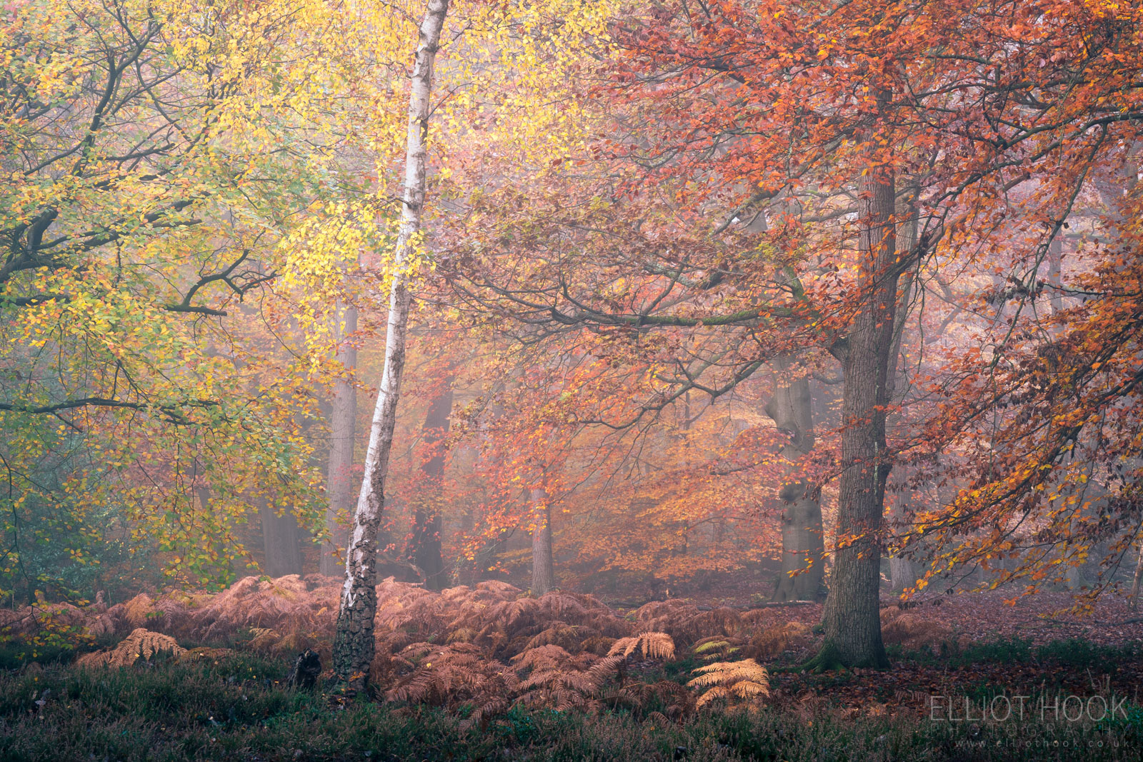 Colourful autumn woodland photograph