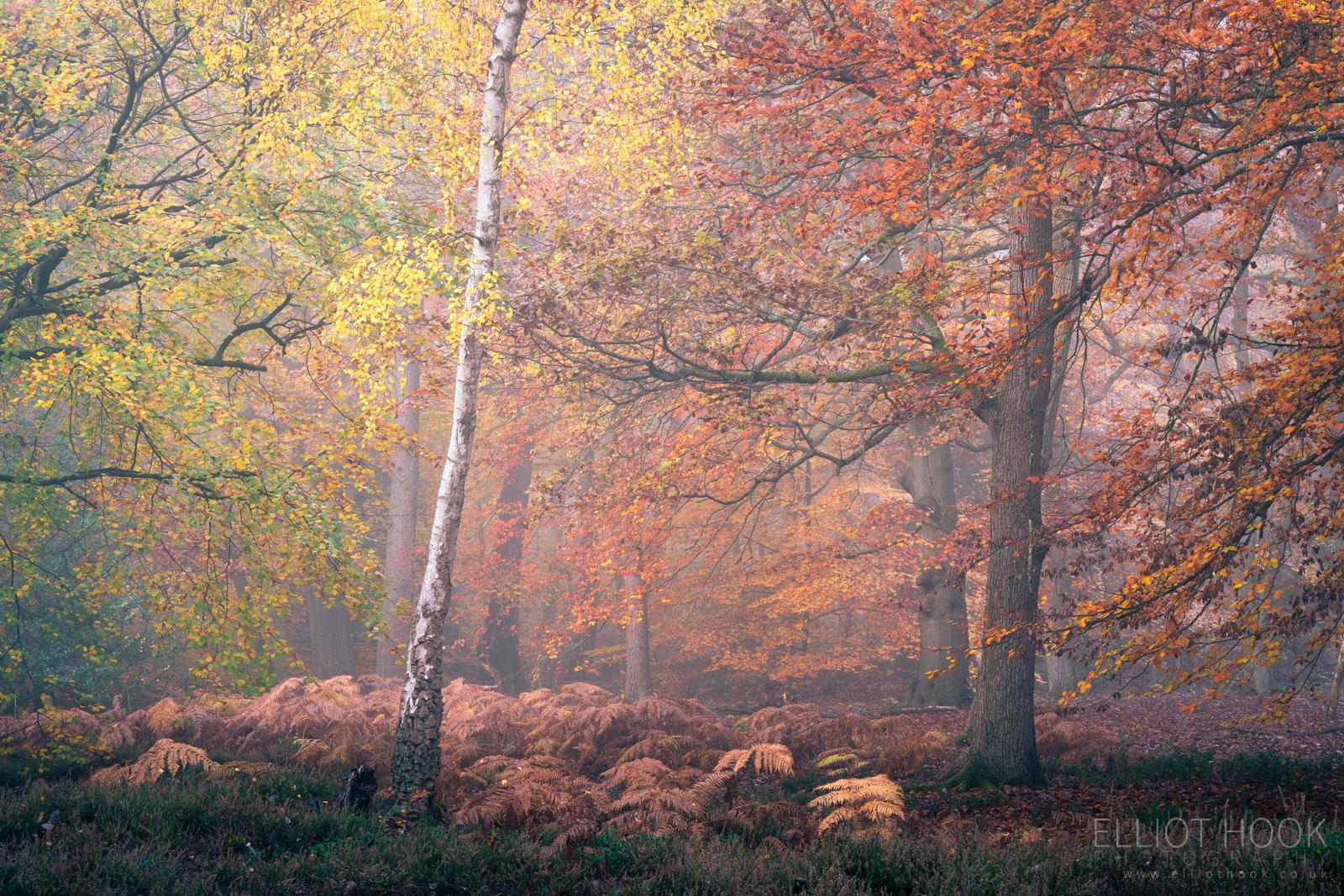 Colourful autumn woodland photograph